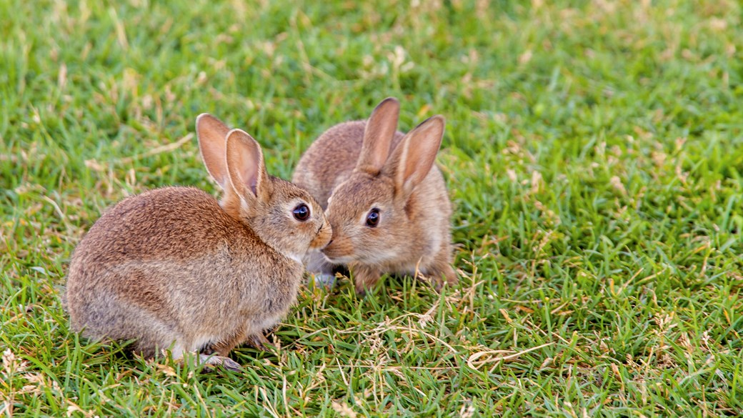 Photo of Can Rabbits Live Alone Happily?
