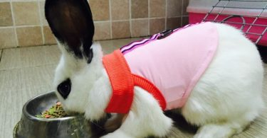 Can Rabbits Wear Dog Clothes?