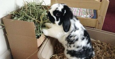 Can you Train a Rabbit to Use a Litter Box?