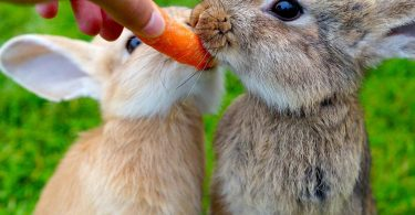 How to Get a Rabbit to Gain Weight?