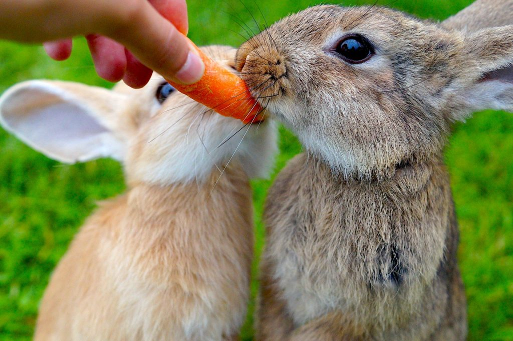 How to Get a Rabbit to Gain Weight