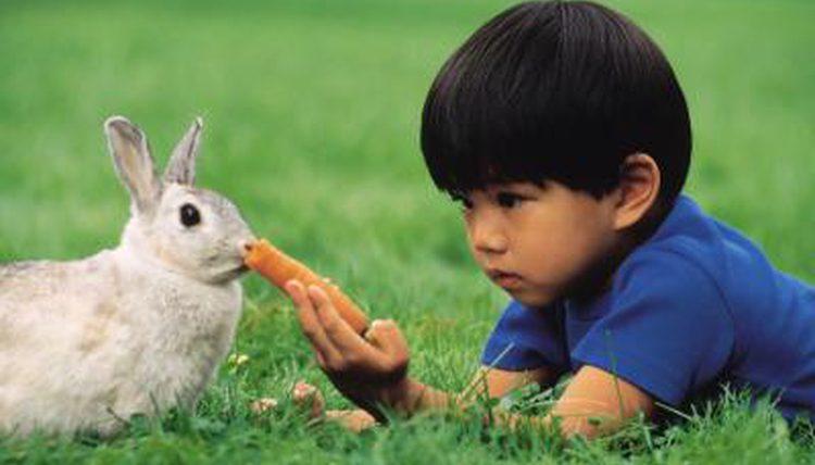 How to Keep Rabbits Teeth Short?