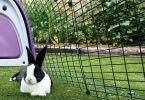 How to Keep a Rabbit Hutch Cool in Summer?