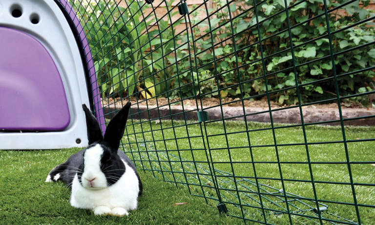 How to Keep a Rabbit Hutch Cool in Summer