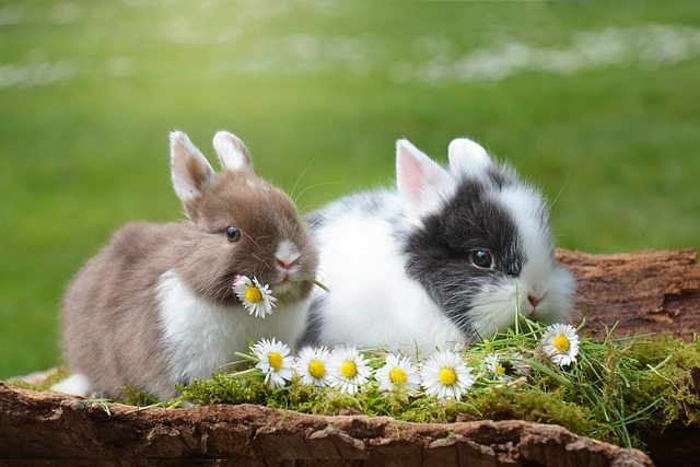 Photo of Why Rabbits Are Good Pets?