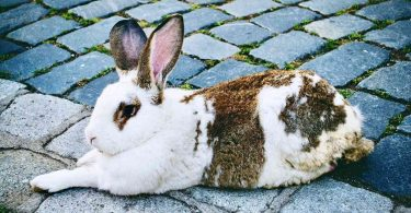 How Do I Stop my Rabbit from Getting Sore Hocks?