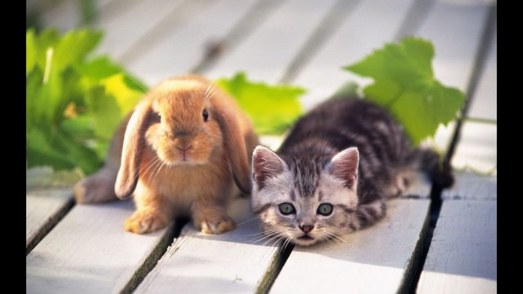 Photo of How to Introduce a Cat to a Rabbit?