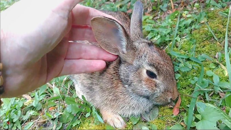 How to Save a Rabbit from Dying?
