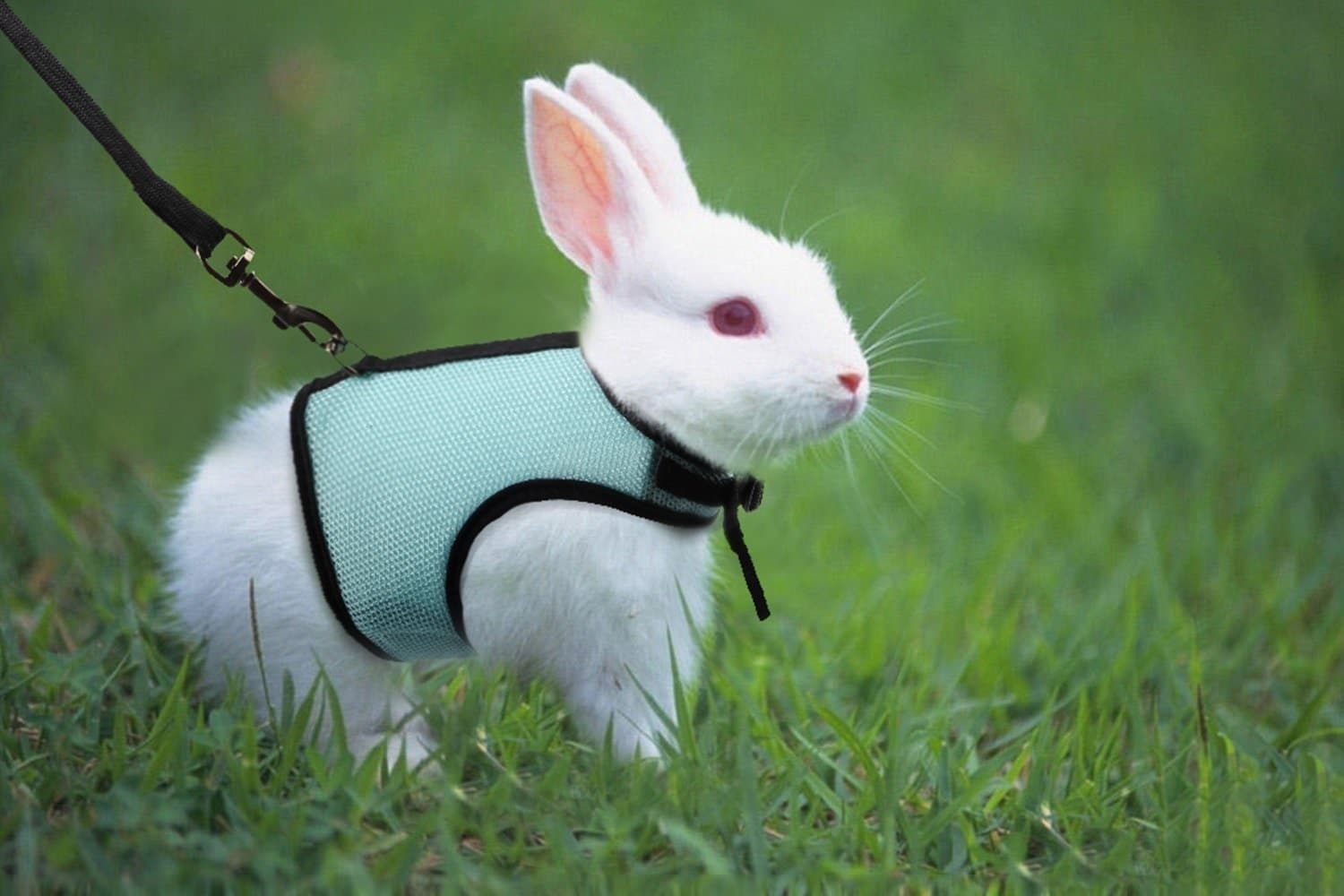What type of harness is best for a rabbit?
