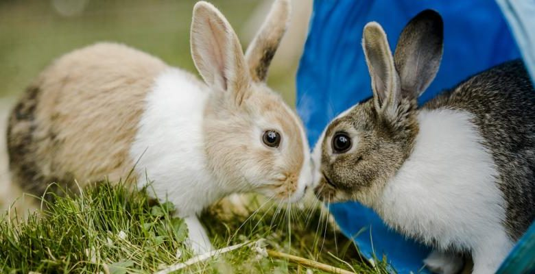 What to Do If a Rabbit Bites You?