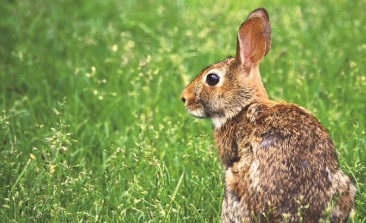 Natural Ways to Get Rid of Rabbits in the Garden