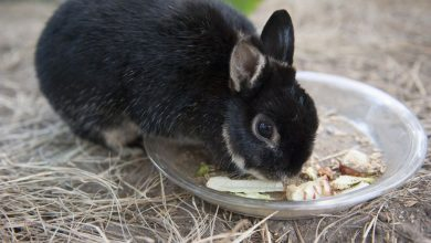 Photo of Do Rabbits stop eating when they are full?
