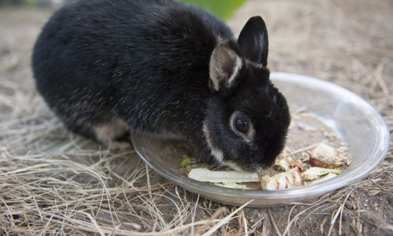 Do Rabbits stop eating when they are full