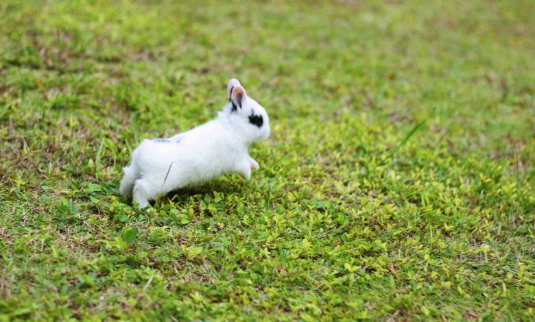 Why my rabbit runs away from me