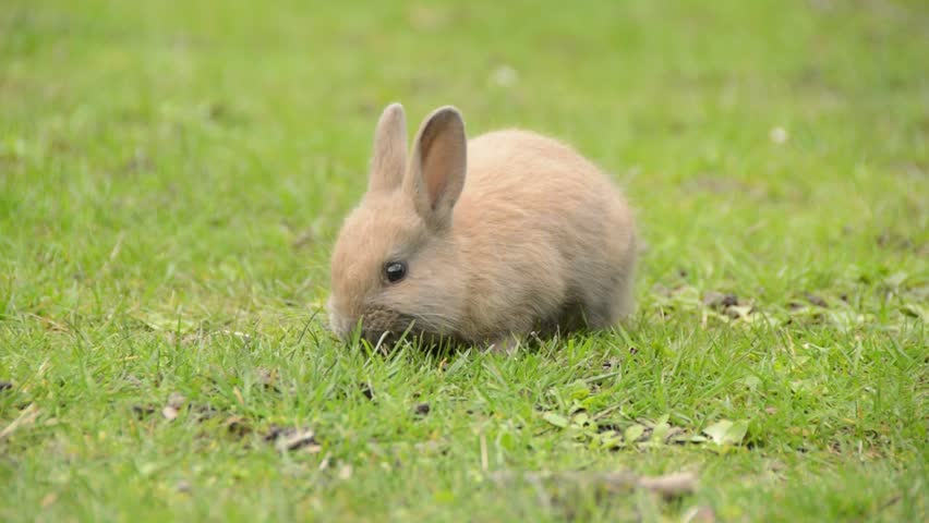 Photo of Can Rabbits Eat Fresh Grass Clippings?