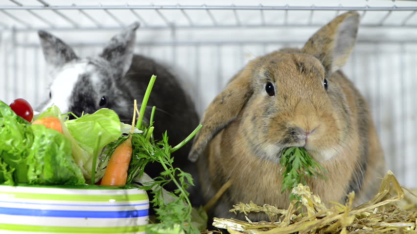 Photo of Can Rabbits Eat Celery Root?