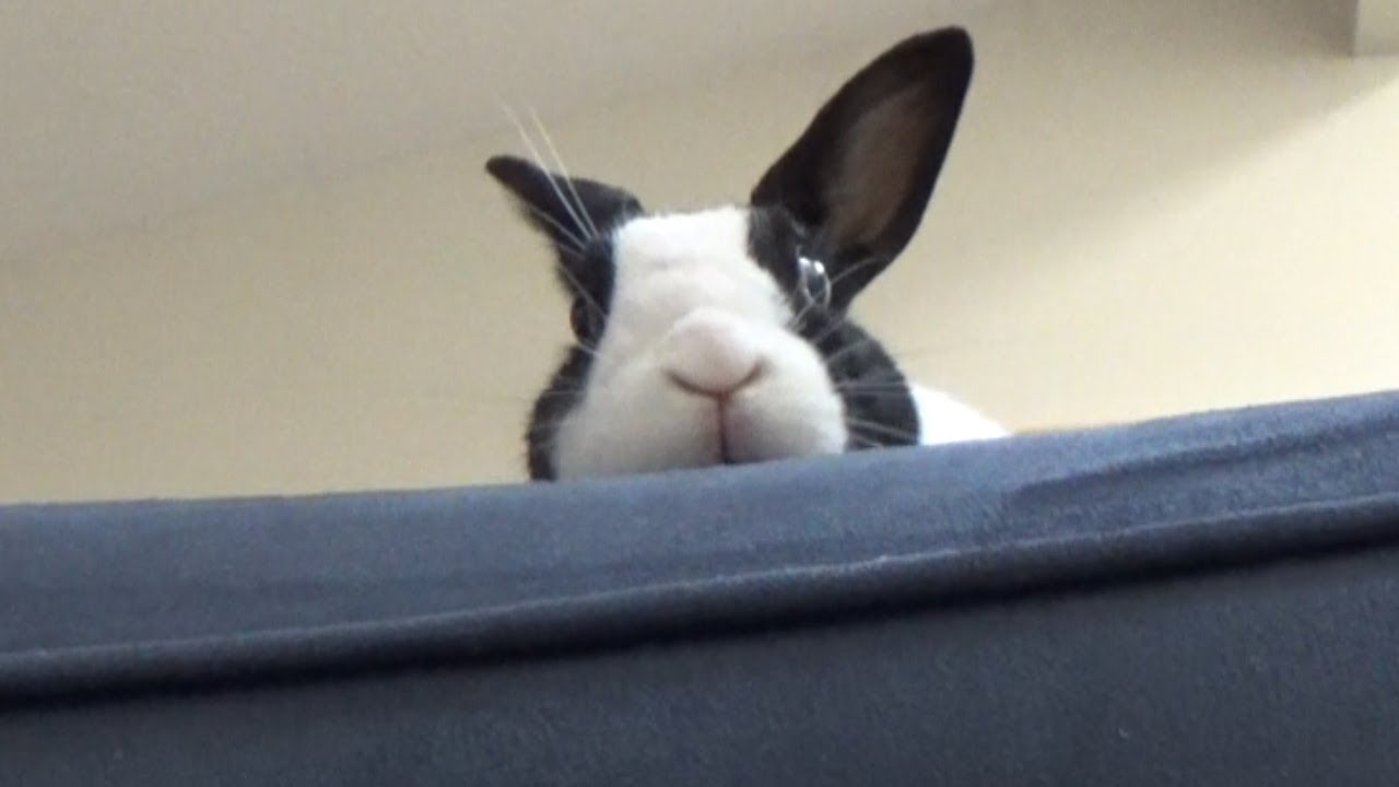 Do Rabbits Get Scared of Thunder