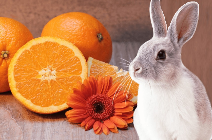 Photo of Can Rabbits Eat Tangerines?