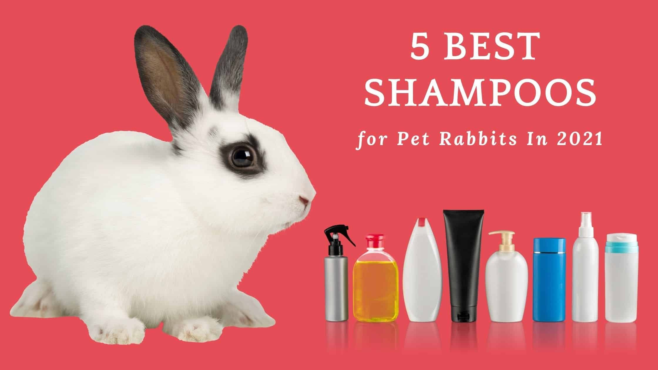 Photo of What shampoo is safe for rabbits?
