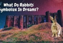 Photo of What do rabbits symbolize in dreams?