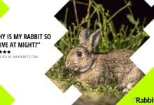 Photo of Why is my rabbit so active at night?