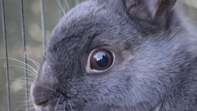 Photo of How to wash a rabbits eye?