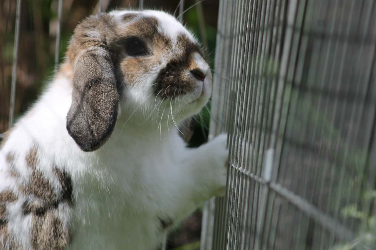Can Rabbits Fit Through Small Holes