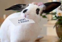 Photo of Where is the best place to adopt a bunny