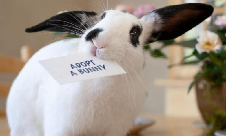 Where is the best place to adopt a bunny
