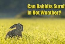 Photo of Can Rabbits Survive In Hot Weather?
