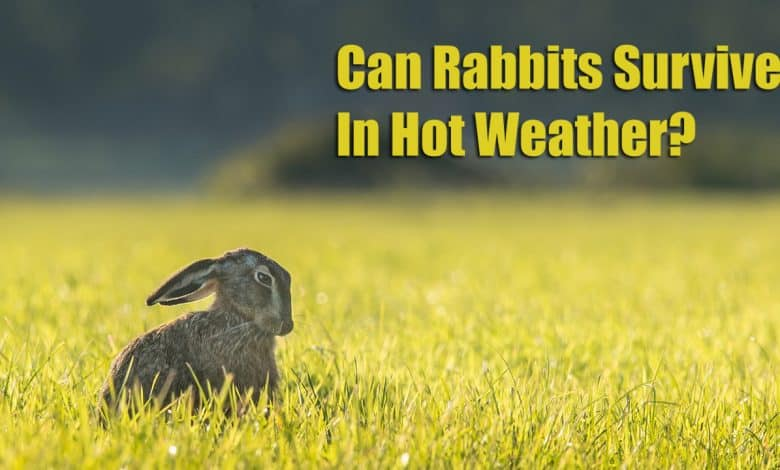 Can Rabbits Survive In Hot Weather