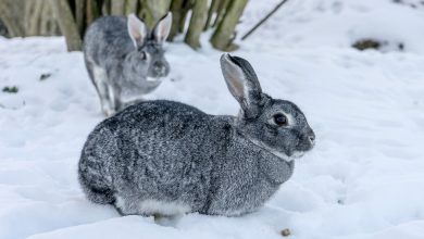 Photo of Can Rabbits Survive in Cold Weather?